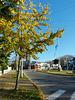 Autumn in Padua