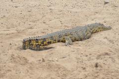 Juna krokodilo. Ĉobe Nacia Parko
