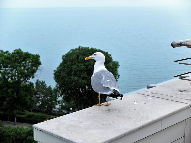 Hallo Percy, wo steckst Du? Ich bin inzwischen am Schwarzen Meer ;-)))