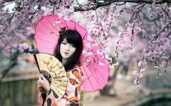 Splendide Geisha