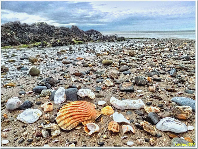 Mussels, shells and other surprises on the beach