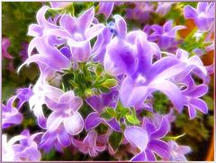 Blue bells... ©UdoSm