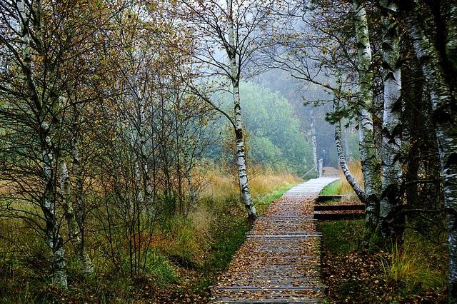 Herbststimmung in einem Niedermoor - Autumn mood in a low moor