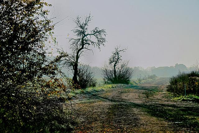 Ein nebliger Wintermorgen - A misty winter morning