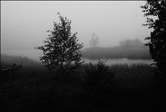 Hohlohmoor im Nebel