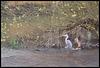Rewley Weir heron