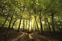 Bloom Wood