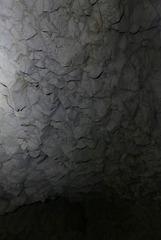 20170525 -28 Spéléo Ardeche Tritons-Cesame (33) al