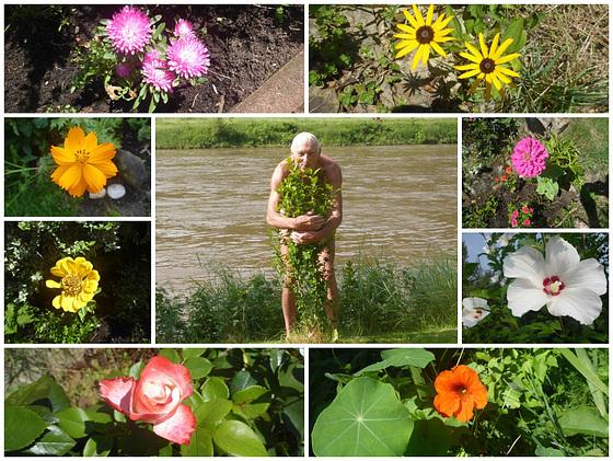 Blüten in meinem Garten  - floroj en mia ĝardeno