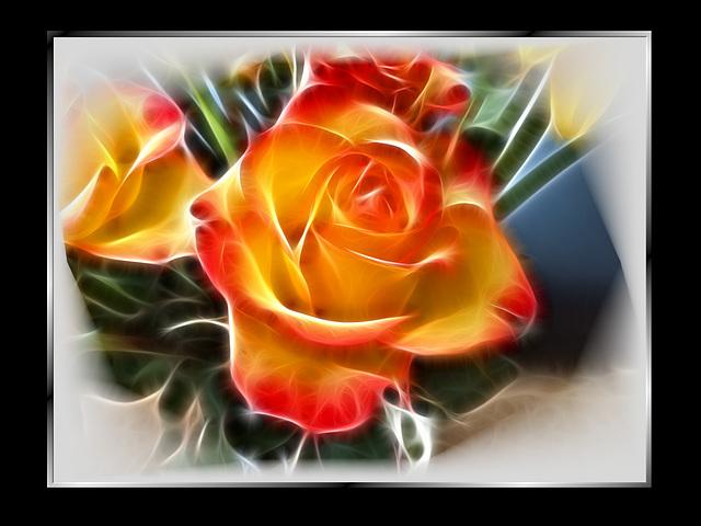 Schönheit einer Rose. ©UdoSm