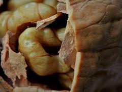 Qui a- t- il à l'intérieur d'une noix ?