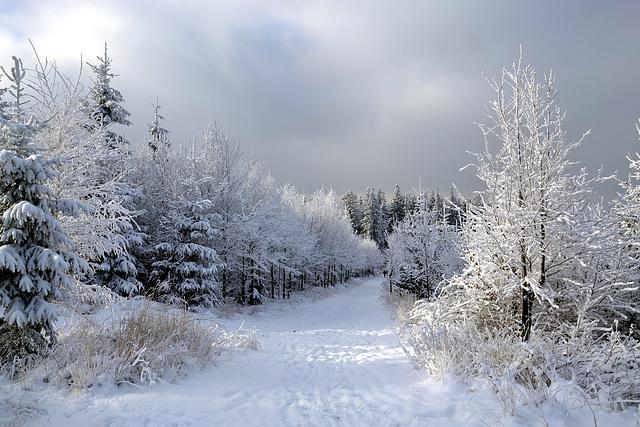 Tombe la neige...                      (EXPLORE)