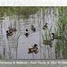 Ducks & Drakes - Drove Park - Denton - Sussex - 17.6.2015
