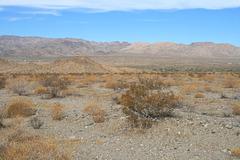 Commerce through the Desert