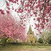 Through the blossom trees.. St.Peter and St.Pauls - Eckington.. p.i.p
