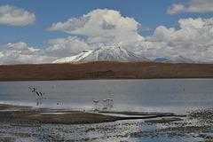 Bolivian Altiplano, Laguna Cañapa and James's Flamingos