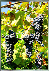 Schöne Ernte... Beautiful harvest... ©UdoSm