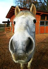 save a horse...ride a cowboy ;)
