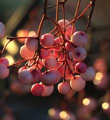 This Mornings Berries
