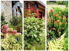 Bonjour fleuri depuis le jardin - H.A.N.W.E.