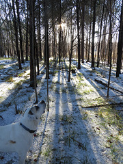 Sunrise in forest after sleet storm