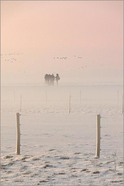 The Birdwatchers on HF-Friday :-)
