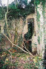 Nettleham Hall, Lincolnshire (burnt 1937 and now an ivy covered ruin)