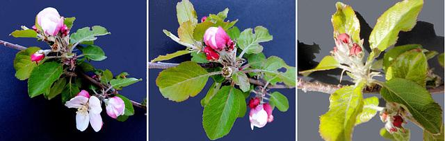 Von der Knospe zur Blüte... From the bud to the flower... ©UdoSm