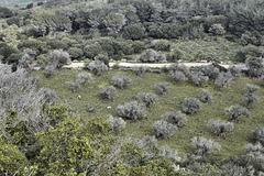 Sheep May Gently Graze – El-Muraqa Monastery, Daliyat al-Karmel, Israel
