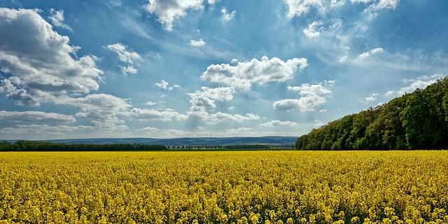 Am gelben Meer ... (PiP)