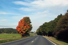 Halbherziger Herbst