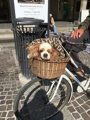 Petit coquin italien ..