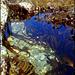 Rock pool - crystal clear waters.