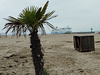 Palm Beach Travemuende