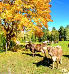 Herbst im Allgäu. ©UdoSm