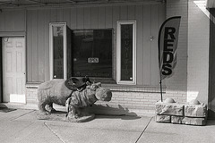 The Hippopotamus In Front Of The Gun Store