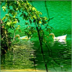 Kursunlu lake : le papere pascolano nel verde del laghetto