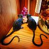 308 Godzilla vs. two giant black rats