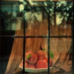 ripening in the window light
