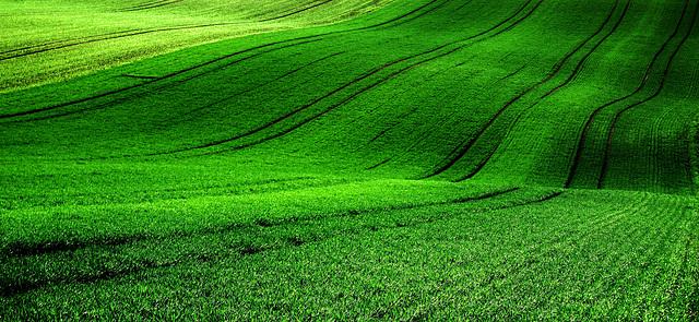 Swinging green - Schwingendes Grün
