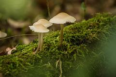 Forêt de la Flachère