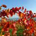 Herbst-Spaziergang in den Weinbergen