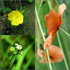 Wildflowers ..