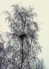 Le nid de pie