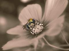 Bee Focused