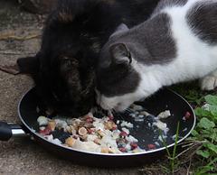 La soupe est bonne et le partage aussi