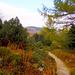 01 Herbst im Gebirgspflanzengarten Schellerhau