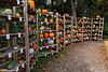 Ein Regal voller Kürbisse - A Shelf Full of Pumpkins (PiPs)