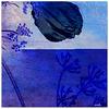 ...cool blue...