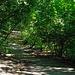 Woodland walk (1)